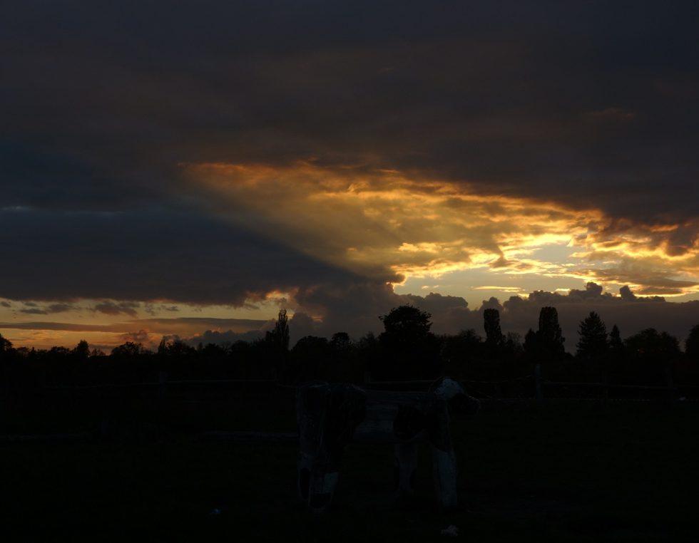 sunset_gross